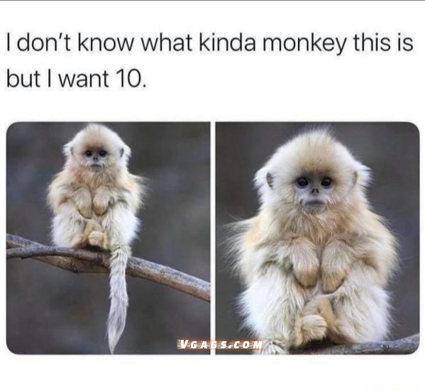 I want this monkey