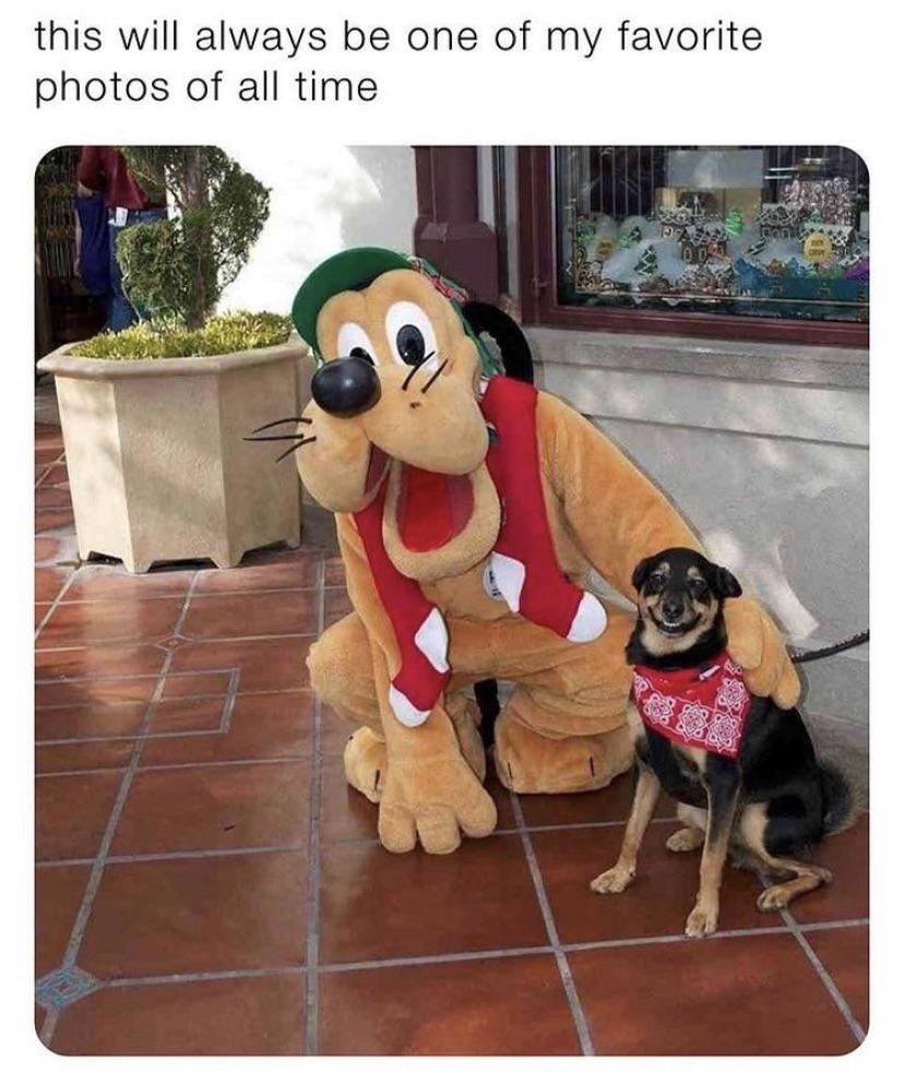 Pluto being wholesome